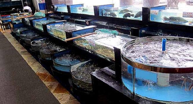 Các bước lắp đặt hồ hải sản cho nhà hàng