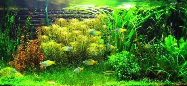 Chăm sóc hồ thủy sinh