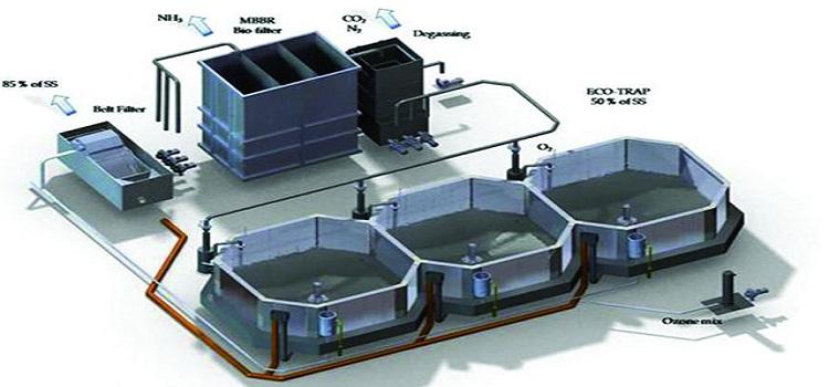 Các loại hệ thống lọc hồ hải sản