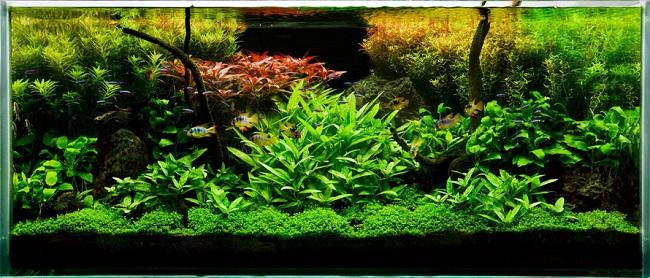 Điều cần lưu ý khi sử dụng phân bón cho cây thủy sinh