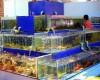 Giá bể nuôi hải sản bao nhiêu tiền?