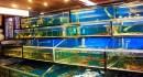 Thiết kế hồ hải sản chuyên nghiệp cho nhà hàng