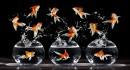 Lưu ý khi nuôi cá cảnh nước ngọt