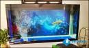 Phong thủy trong cách chơi bể cá cảnh