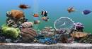 Cách chăm sóc cá cảnh