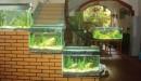 Những vị trí trong nhà không nên đặt hồ cá