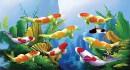 5 giống cá cảnh nước ngọt dễ nuôi