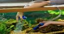Cách xử lí nước hồ cá cho người mới chơi