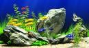 Cách trang trí bể cá cảnh đẹp