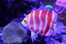5 loài cá đắt giá nhất trên thế giới