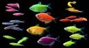 Cách nuôi cá cảnh